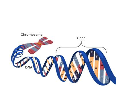 Using Genetic Family Histories in Dermatological Practice