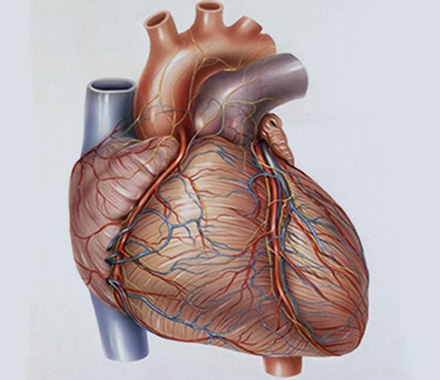 Causes and Management of Myocarditis
