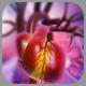 Heart Failure and Heart Valve Disease