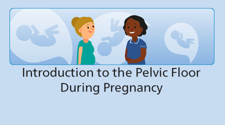 Introduction to the Pelvic Floor during Pregnancy